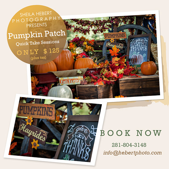 pumpkin-patch-fall-mini-sessions-sheila-hebert-photography-splendora-new-caney-porter-kingwood-photographer